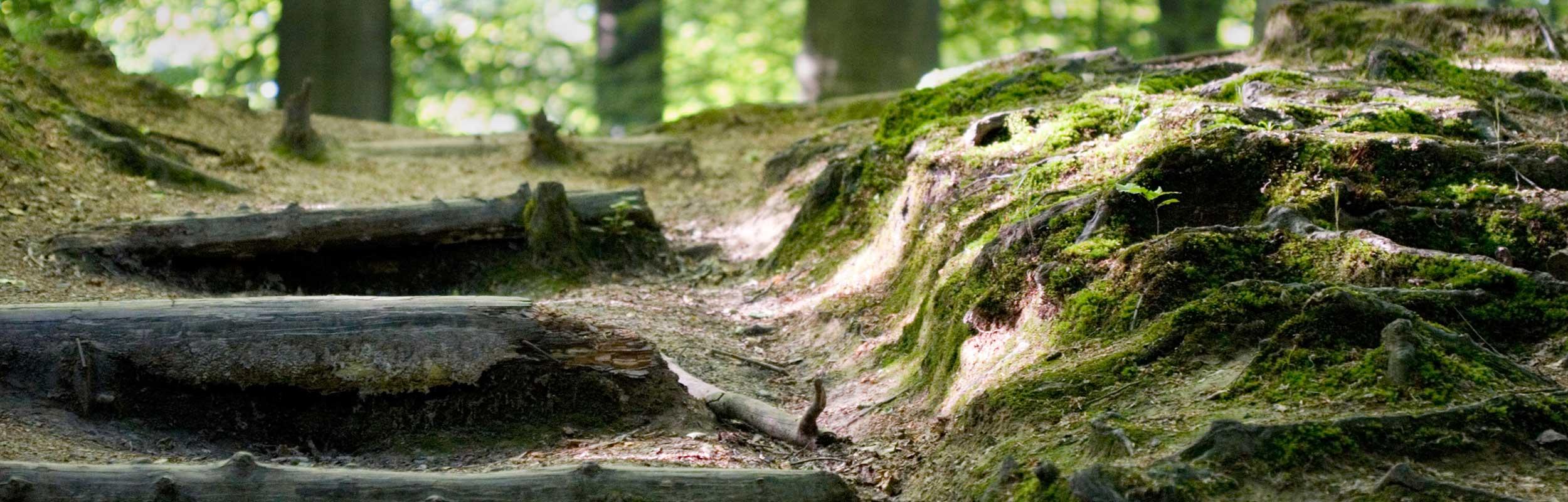 Slider-Der-Weg